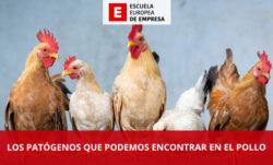Los patógenos que podemos encontrar en el pollo
